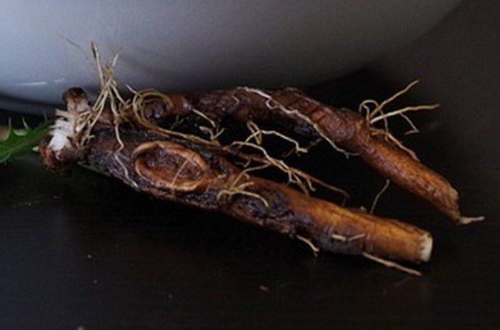 PISSENLIT RACINE Taraxacum Officinalis